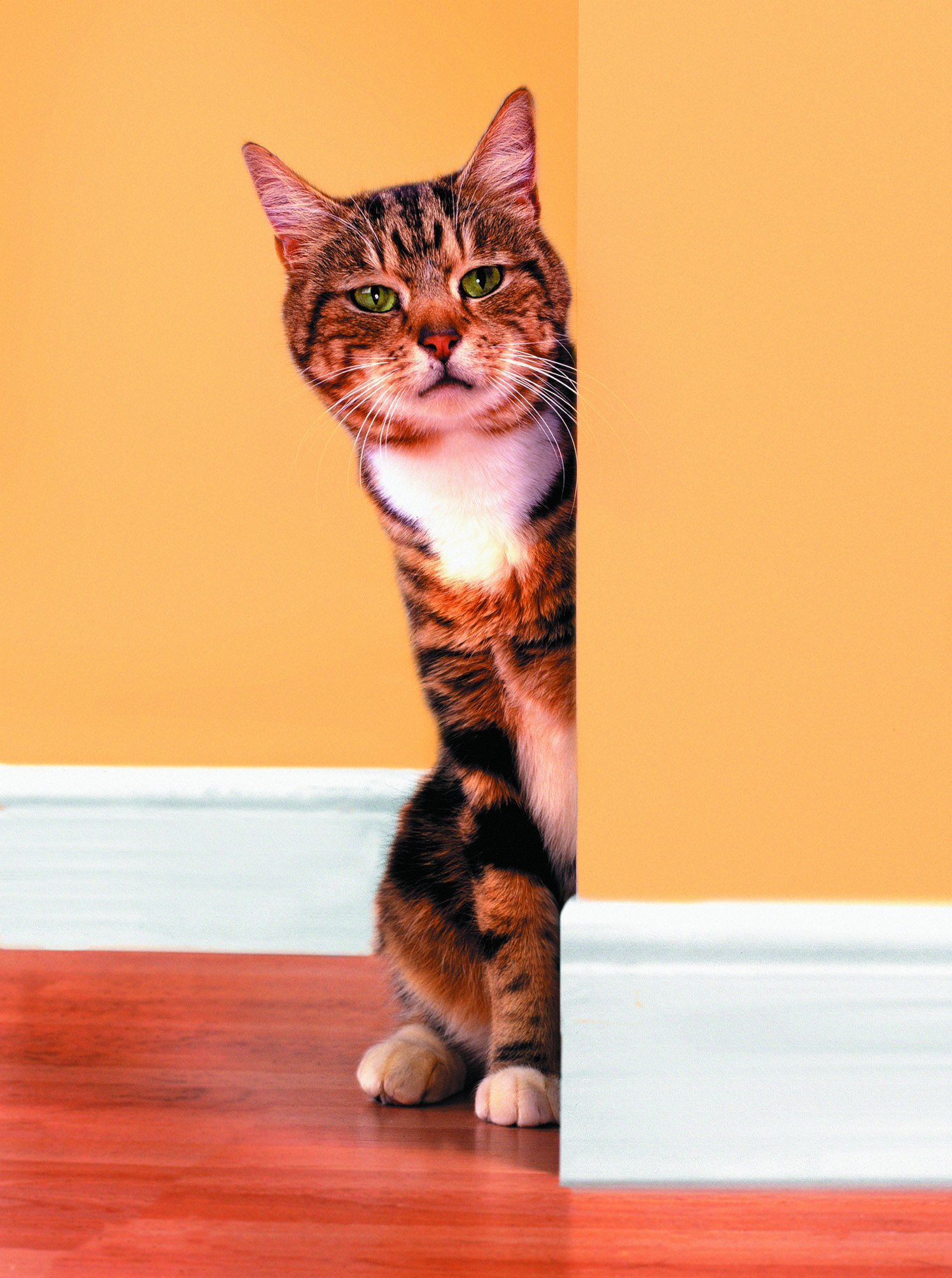How To Fix Cat Scratches On Wallpaper