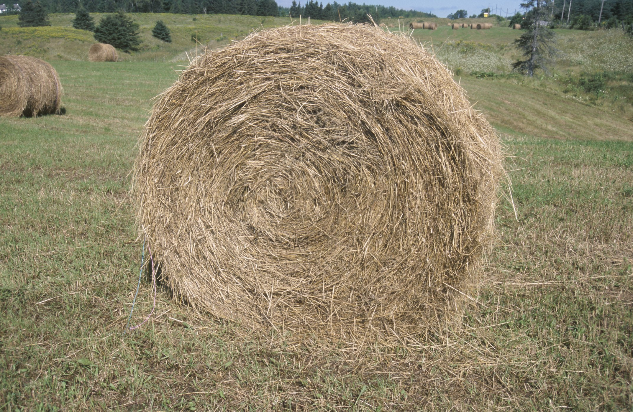 How to paint on round hay bales ehow for Bales of hay for decoration